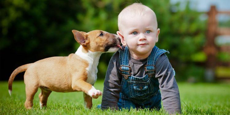 რატომ უნდა გყავდეთ შინაური ცხოველი როდესაც სახლში ბავშვია? ცხოველების როლი ბავშვის აღზრდაში...