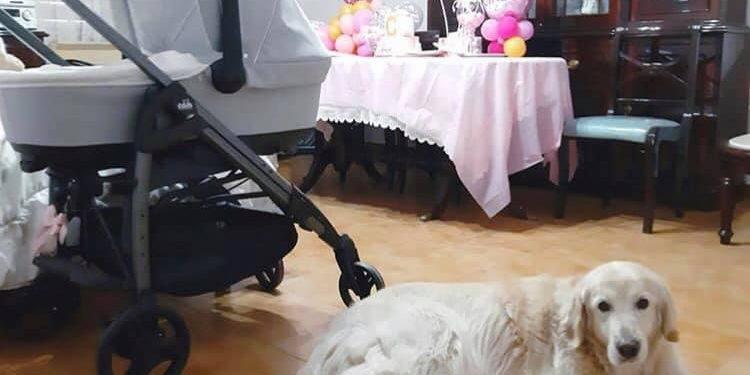 შინაურ ცხოველებს შეუძლიათ დახმარება გაუწიონ მშობლებს... რა როლი აქვთ ძაღლებს ბავშვის აღზრდაში?