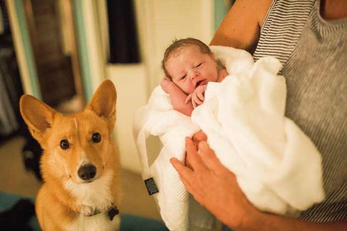 მზრუნველი ძაღლი პატრონს მშობიარობისას გვერდიდან არ მოსცილებია...